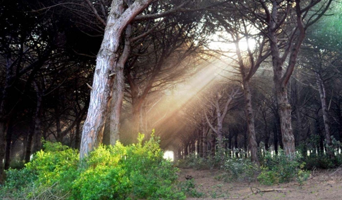 Parque Gallinara