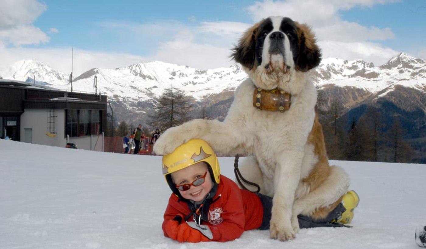 Bambino con San Bernardo