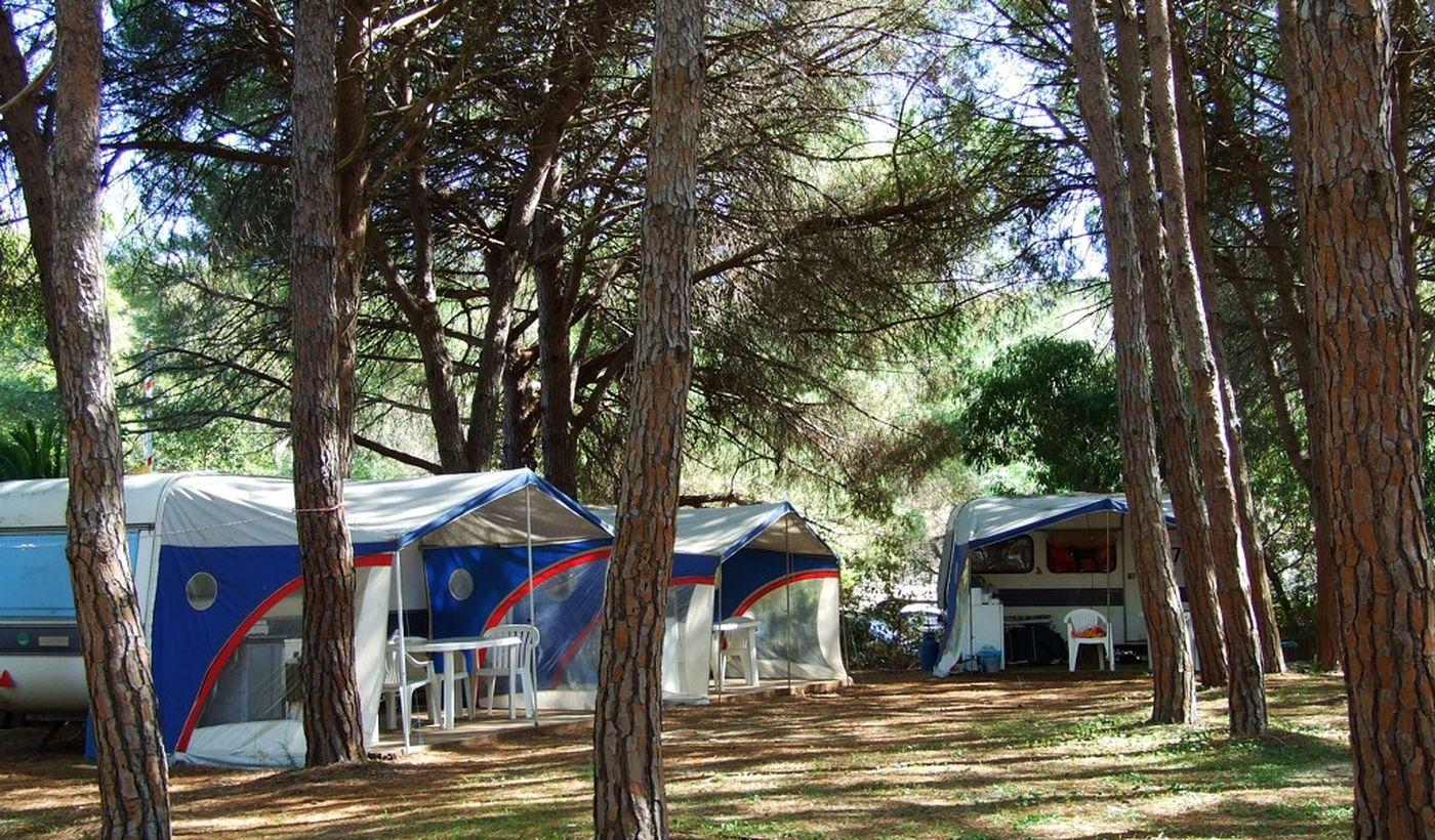 Camping in einem Kiefernwald