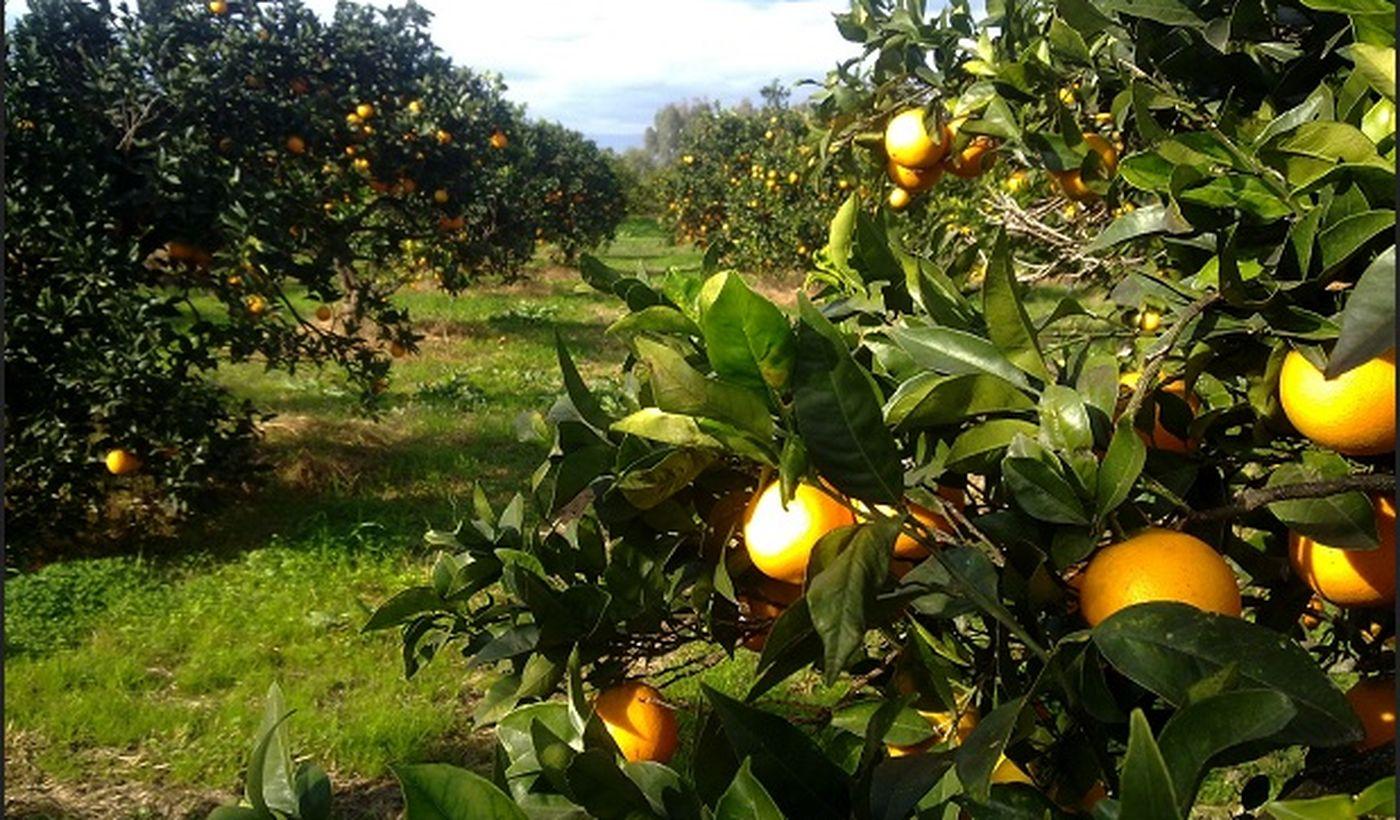 Agriturismo in Ogliastra