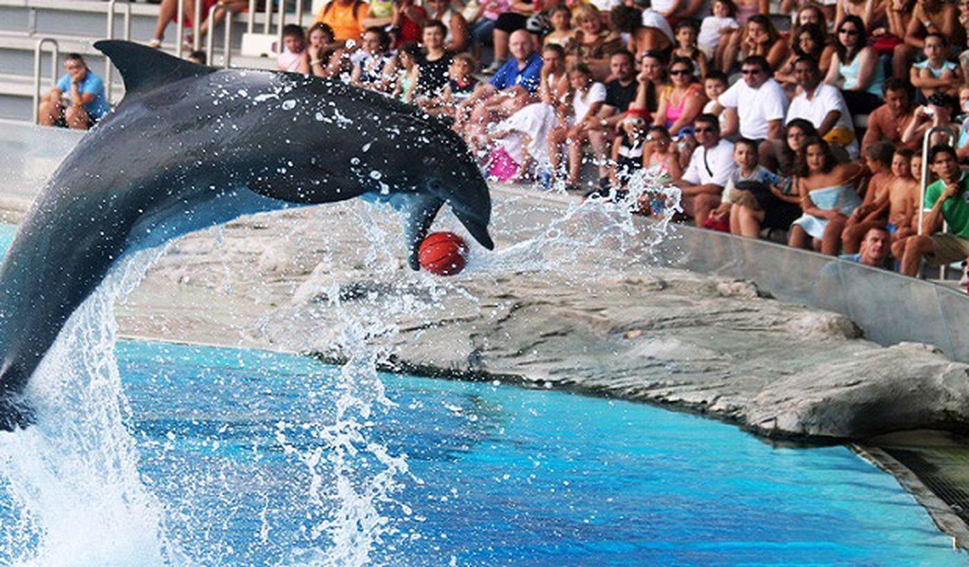 Show mit Delfinen