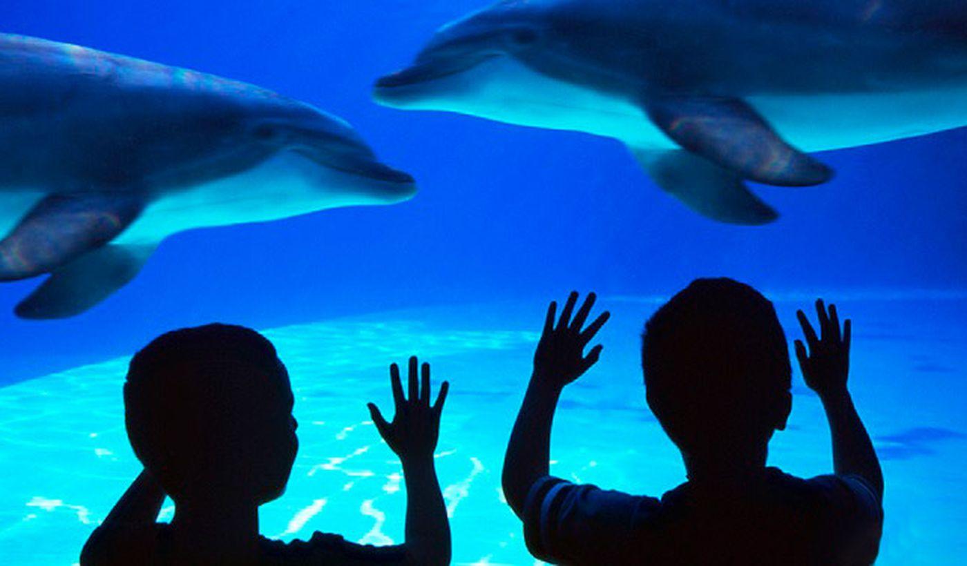 Aquarium mit Delfinen