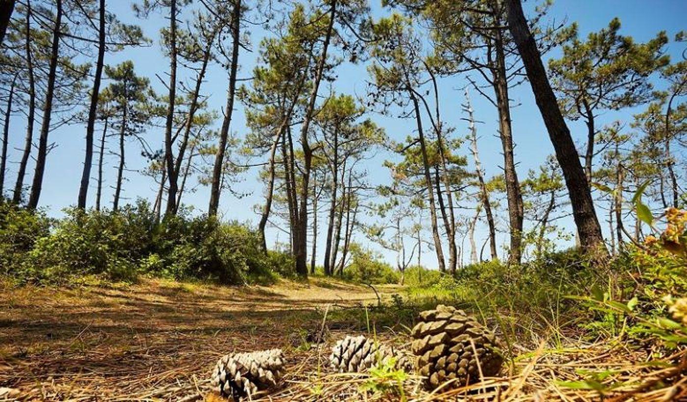 """La nature du territoire du camping """"La Caillebotière"""""""