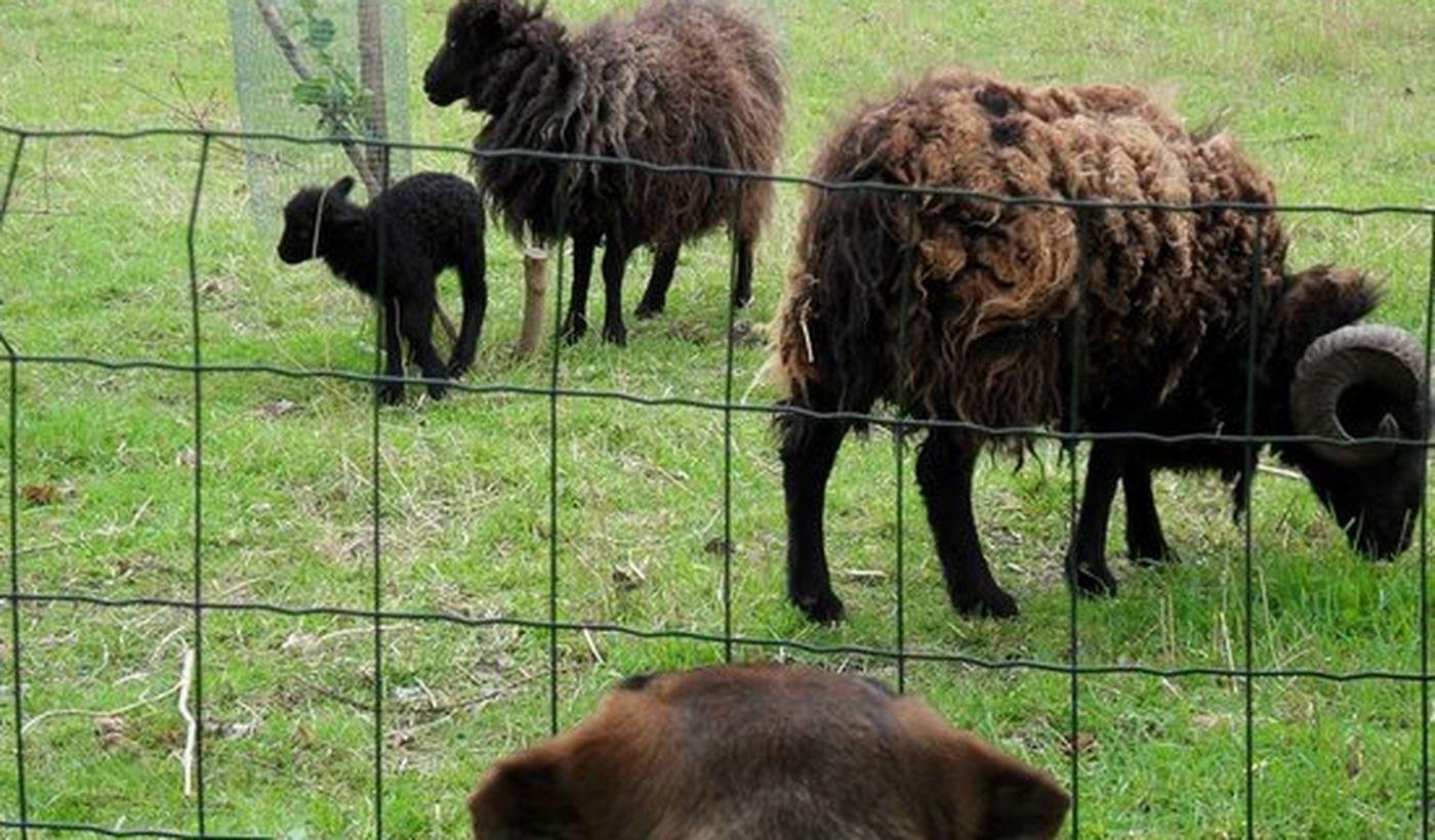 Les animaux du Camping Pré-Vert La Croix-Galliot