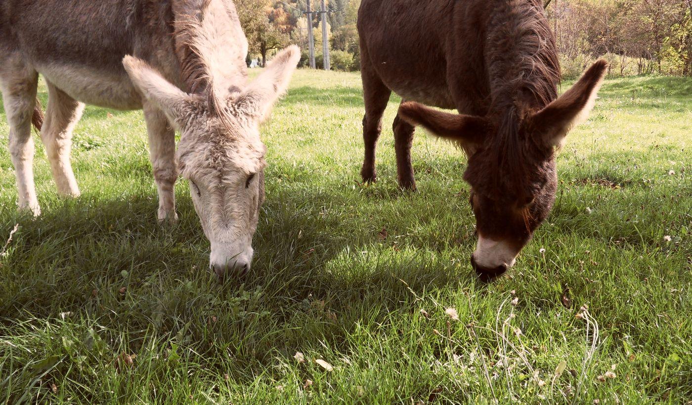 Nature et animaux du Camping Le Val des Cévennes