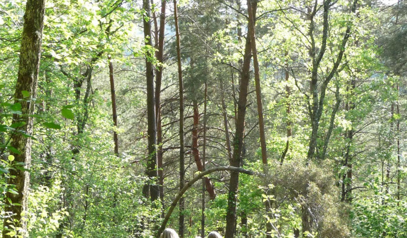 Nature près du camping