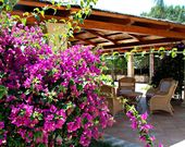 Bar mit Blumen