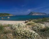 Weißer Strand in Sardinien