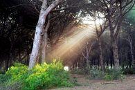 Park Gallinara