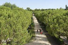 Spaziergang in der grünen