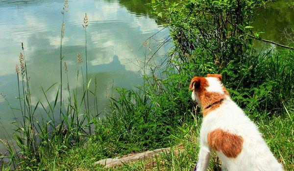 Cane al lago