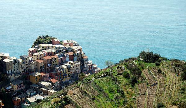 Vigne alle Cinque Terre in Liguria