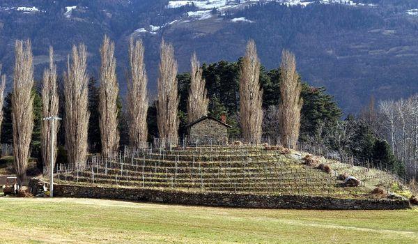 Tumulo e vigne in Valle d'Aosta