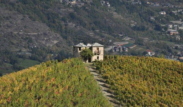 Vigna in Valle d'Aosta