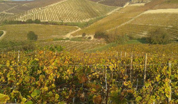 Vigne piemontesi in autunno