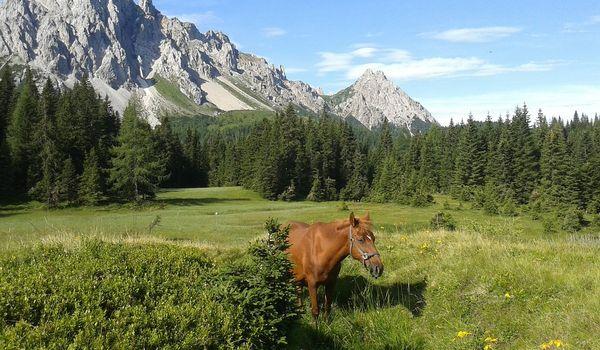 Montagne in Friuli Venezia Giulia