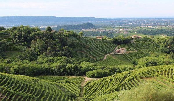 Vigne a Treviso