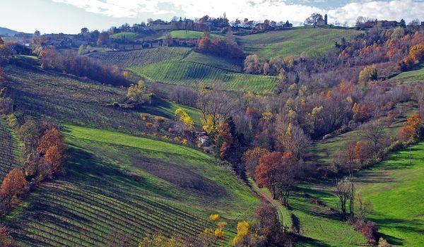 Vigne a Parma