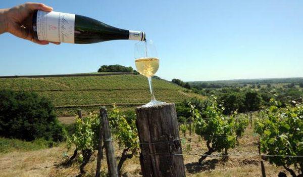 Vino bianco friulano