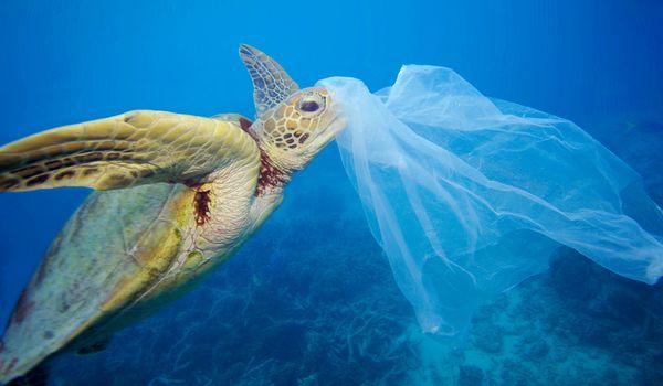 Estate Plastic Free in Puglia