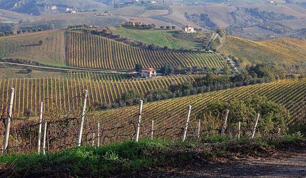 Paesaggio vinicolo in Abruzzo