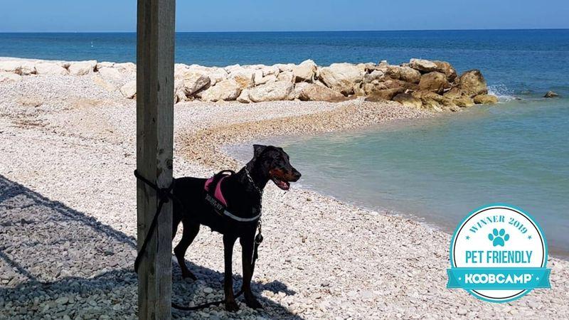 Los 10 mejores Campings y Complejos Pet Friendly en Italia: el Pineto Beach Village & Camping - Pineto (TE) es el primero en el 2019