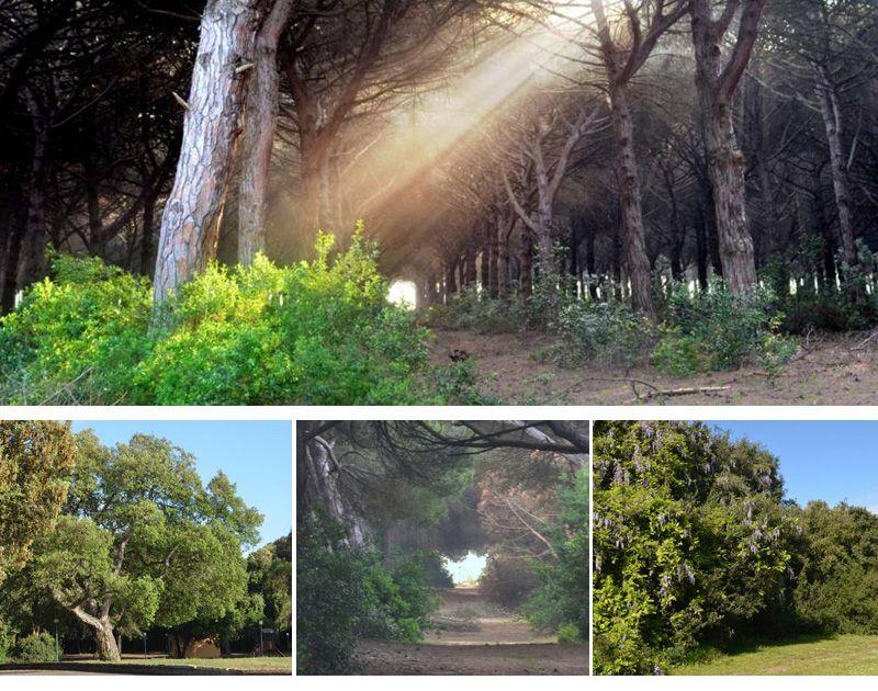 Il Parco della Gallinara